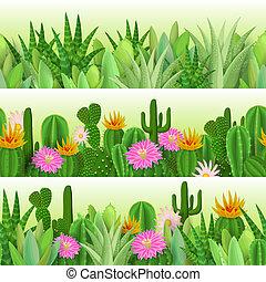 cactus, en, succulent