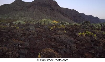cactus field in desert - cactus field in dark desert