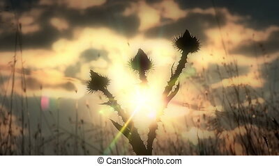 cactus flowers sunset
