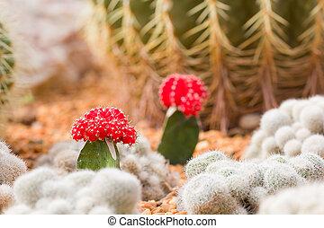 cactus, fond, jardin, coloré, après-midi