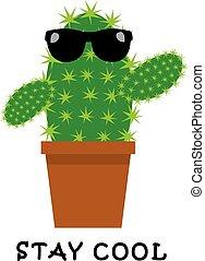 cactus, gekke , koel