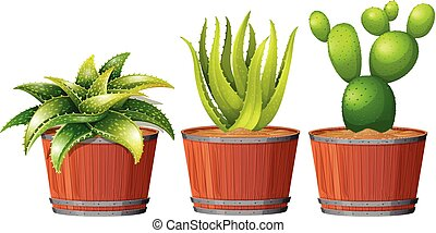 Cactus Growing in the Pot illustration