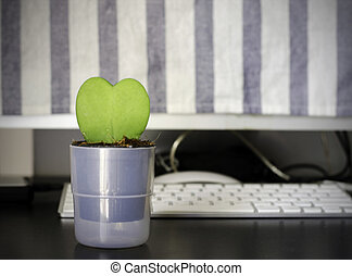 Cactus heart in a pot on the office table