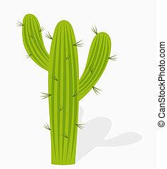 cactus, illustration