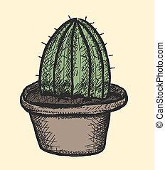cactus, illustrazione, vettore, scarabocchiare