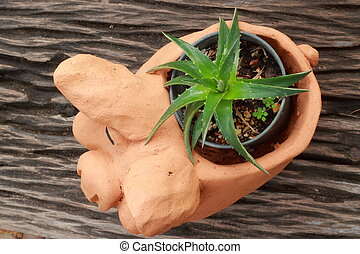 Cactus in a black cup pottery pigs