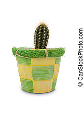 cactus in a decorative pot