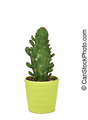 cactus in a green plant pot