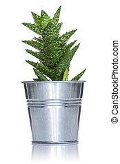 Cactus in a metal pot