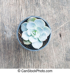 Cactus in a pot plant on wood background