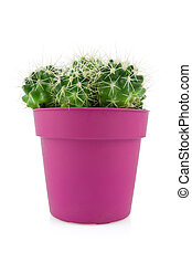 cactus in a purple pot