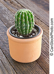 Cactus in ceramic pot on wooden background