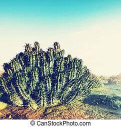 Cactus in desert - Cactus in Western Sahara