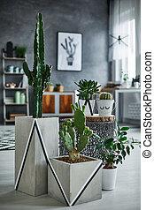 Cactus in modern decorative pot
