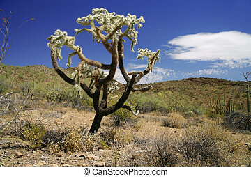 Cactus in Organ Pipe National Monument, Arizona, USA