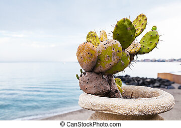 cactus in pod on waterfront in Giardini Naxos - travel to...