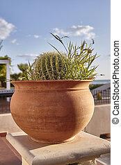 Cactus in pot #3