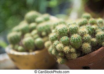 cactus in pot for decor