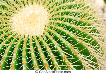 cactus in pot on wall decoration home