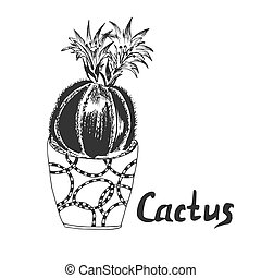 Cactus in sketch style, vector illustration