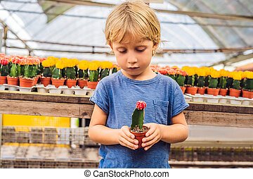 Cactus in the hands of the boy. little boy hugging his ...
