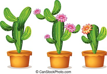 Cactus in the plant pot