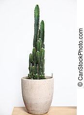 Cactus in white pot on white background