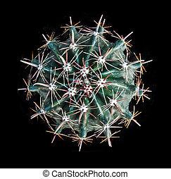 cactus isolated on black background
