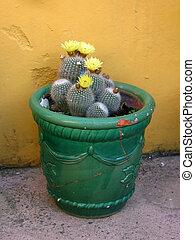 cactus, met, gele bloemen