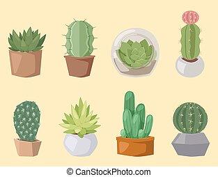 Cactus nature desert flower green mexican succulent tropical...