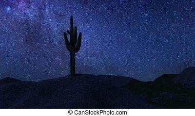 Cactus night Beautiful desert landscape glorious view 4k
