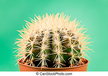 Cactus on a green background.