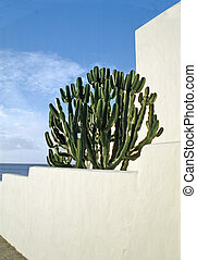 Cactus on a white painted balcony