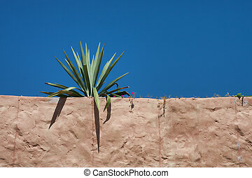 Cactus on Brown Stucco Building