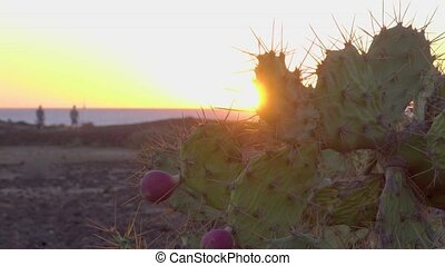 Cactus on seashore at sundown in Tenerife, Canary Islands