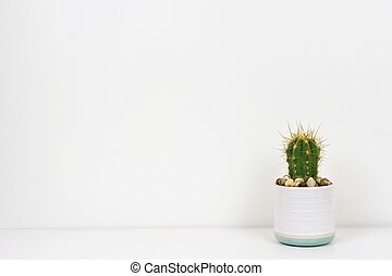 Cactus plant in a white pot on shelf against a white wall