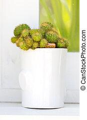 Cactus plant with white ceramic pot.