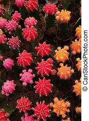 Cactus planted in a garden,