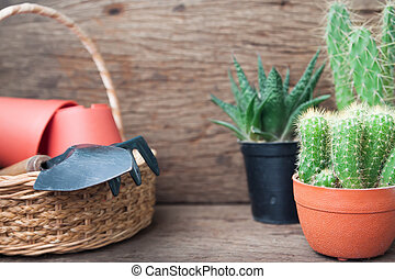 Cactus plants and garden tools in basket on wooden background