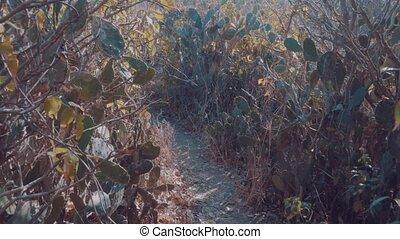 Cactus plants of tropical island Bali - Beautiful tropical...