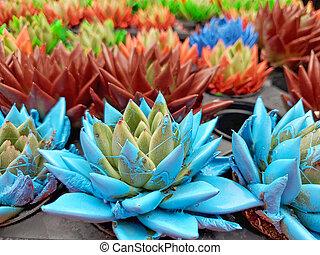 cactus plants with colorful paint