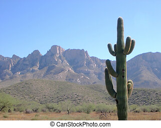 Cactus scene - Cactus and desert scene for background. Room...