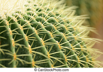 cactus schließt