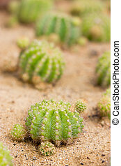 Cactus, shallow depth of field.