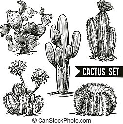 Cactus Sketch Set - Different shapes desert and domestic...