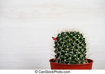 cactus succulent in flower pot on wooden background