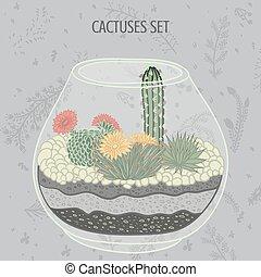 cactus, suculento, plantas