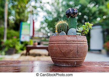 cactus, sugar palm leaf, decoration in the garden
