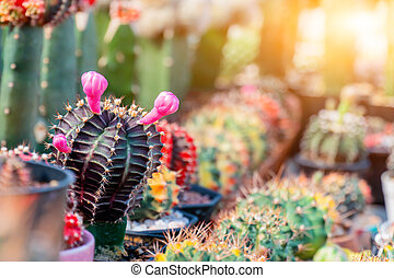 cactus, sugar palm leaf for decoration, plant and tree in the garden