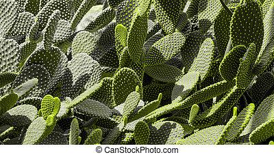 Cactus texture background.